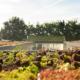 Compleet dakpakket incl groendak – Hospice Wilma Thissen, Mook